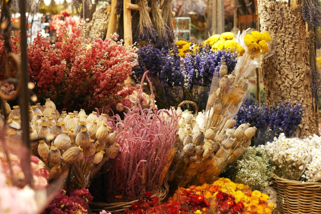 fleurs dèches