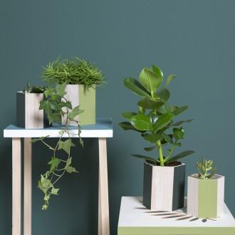2. Customiser un pot en bois green