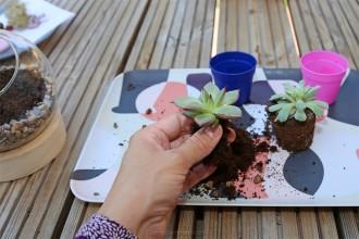 3. Etape 2 : Planter les cactées
