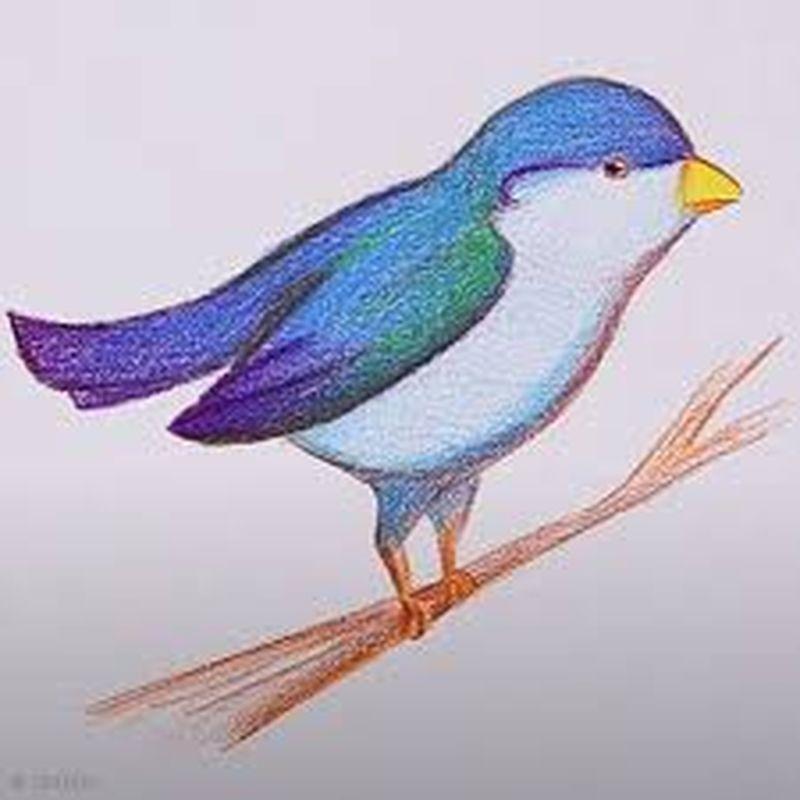 Tuto Video Comment Dessiner Un Oiseau Idees Conseils Et Tuto Beaux Arts Dessin