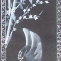Oiseau chasseur - tout en noir et blanc