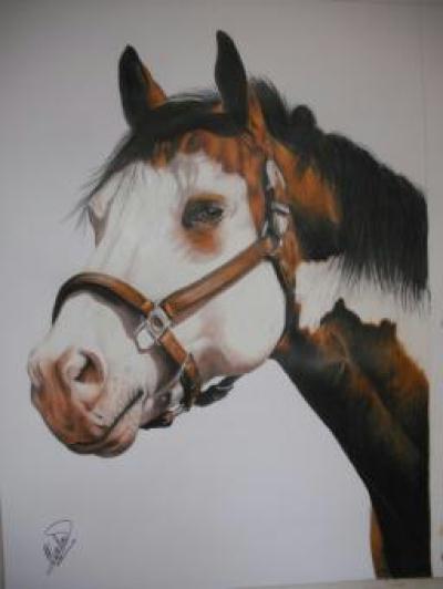 Portrait aux crayons de couleur ouragan cheval appaloosa pie cr ation beaux arts dessin de - Cheval dessin couleur ...