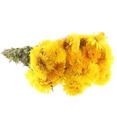 Fleurs séchées - Helichrysum Jaune - 50 cm environ