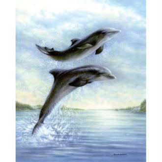 Image 3D Animaux - Duo de dauphins 24 x 30 cm