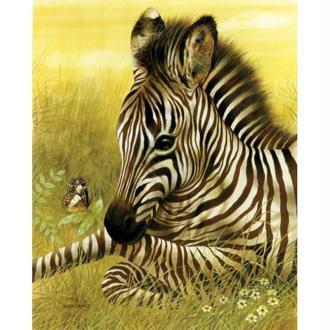 Image 3D Animaux - Zèbre et papillon 24 x 30 cm