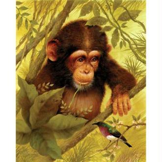 Image 3D Animaux - Chimpanzé et oiseau 24 x 30 cm