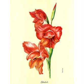 Image 3D Fleur - Gladiolo rouge 24 x 30 cm