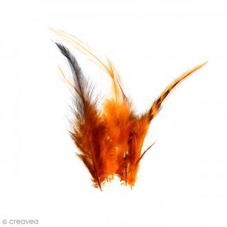 Plumes déco Orange - 15 pièces