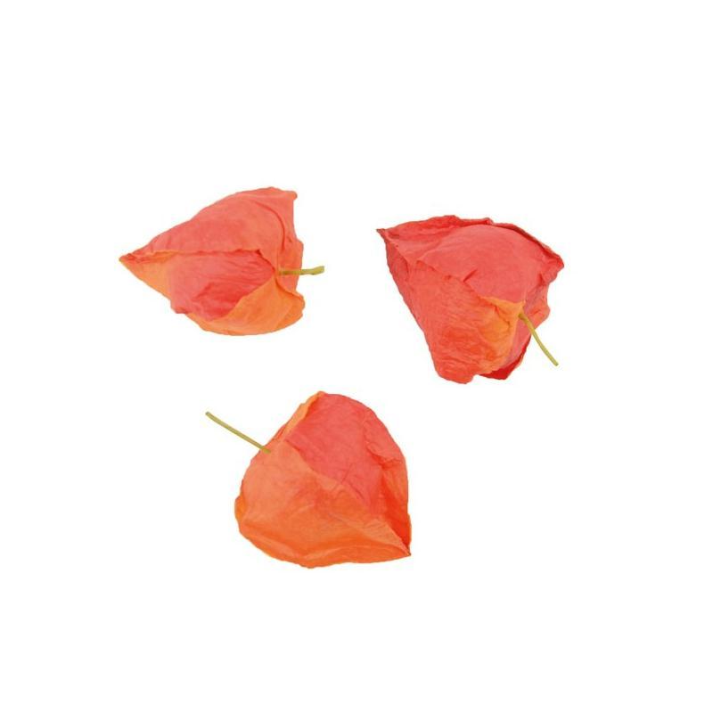 12 physalis papier rouge orange de 4 cm d co table fleur - Service de table rouge ...