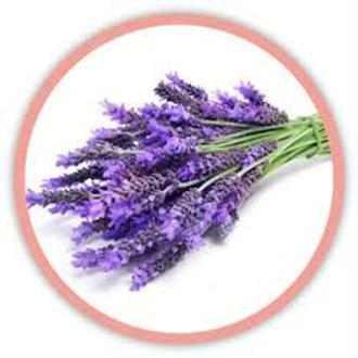 Fragrance Lavande de Provence 100% Naturelle