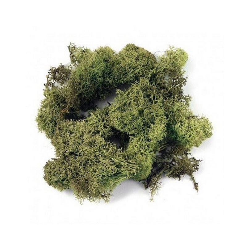 Sachet de mousse d 39 islande lichen vert clair de 50g pour une d co - Mousse pour assise canape ...
