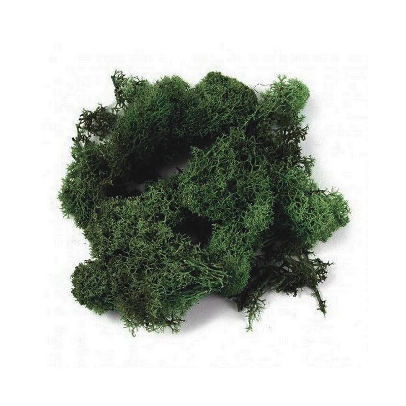Sachet de mousse d 39 islande lichen vert fonc de 50g pour une d co - Mousse pour assise canape ...