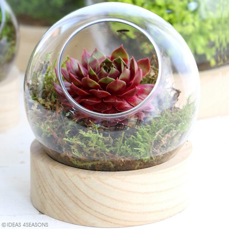 Vase en verre avec base en bois - Rond - 12 x 13 cm - Photo n°2
