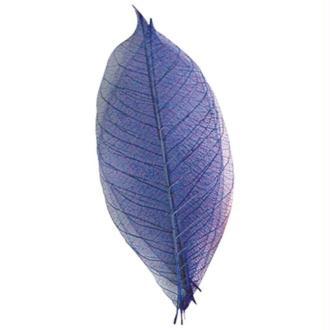 Feuille bleue x20