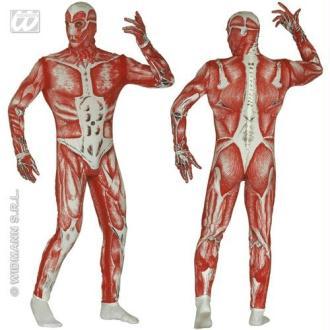 Combinaison anatomique Humain écorché