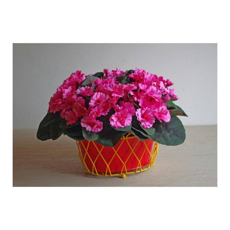 Plante fleurie h22cm saint paulia fleurs roses - Plante artificielle pour exterieur ...