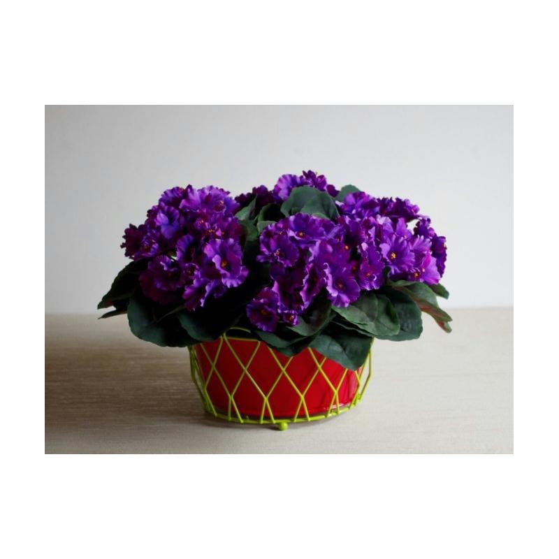 Plante fleurie h22cm saint paulia fleurs violettes - Plante artificielle pour exterieur ...