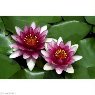 Image 3D Fleur - Deux Nénuphars - 24 x 30 cm