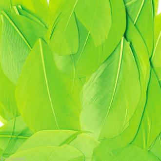 Plume ronde 6 cm - Vert x 3 gr