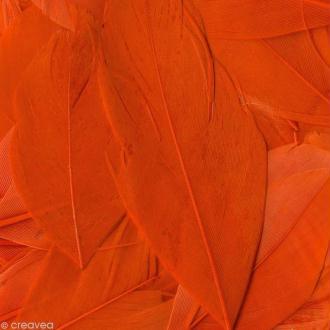 Plume ronde 6 cm - Orange x 3 gr