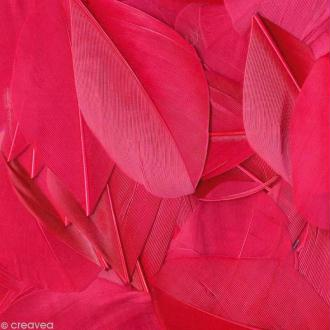 Plume ronde 6 cm - Rose fuchsia x 3 gr