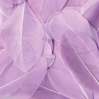 Plume ronde 6 cm - Mauve clair x 3 gr