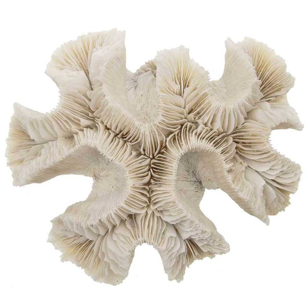 Bloc de corail fleur - 349 grammes - Photo n°1