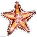 Sticker décoratif - Hippocampe - 10 x 10 cm - 2 pcs - Photo n°2