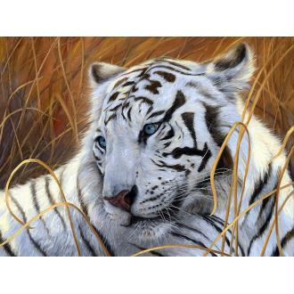 Broderie Diamant Kit - Tigre blanc - 40 x 30 cm