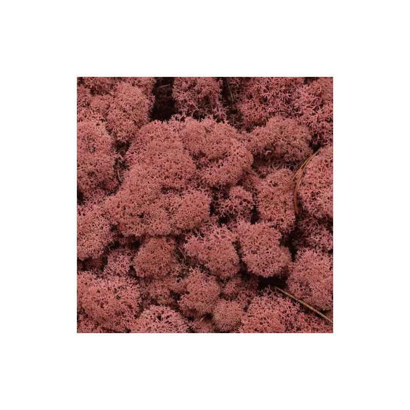 mousse d corative pour art floral vieux rose vendue en sachet de 40 g mousse et lichen. Black Bedroom Furniture Sets. Home Design Ideas