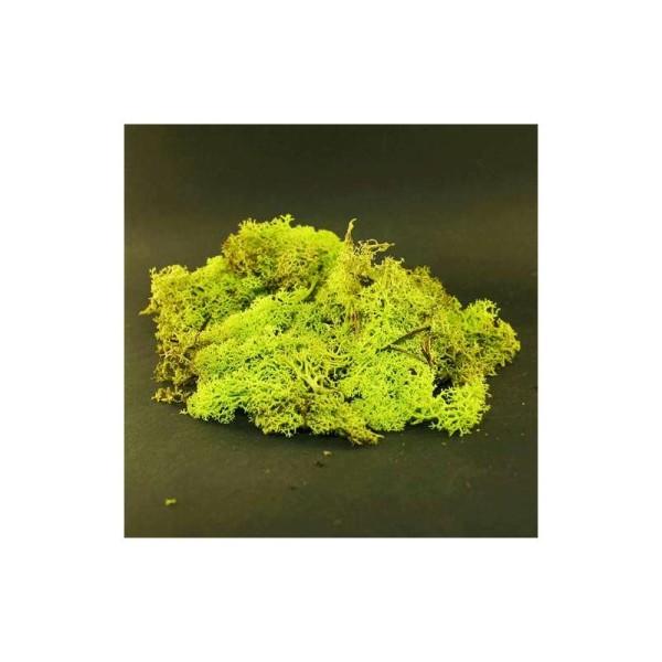 Mousse décorative pour art floral vert printemps. Sachet de 40 g - Photo n°1