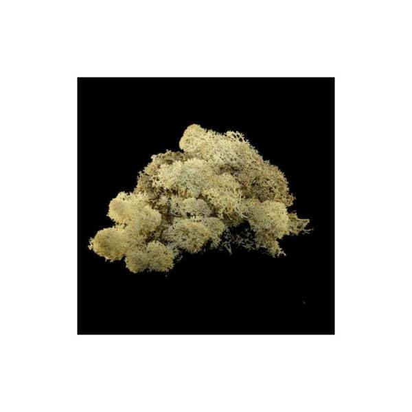 Mousse décorative pour art floral nature. Sachet de 40 g - Photo n°1