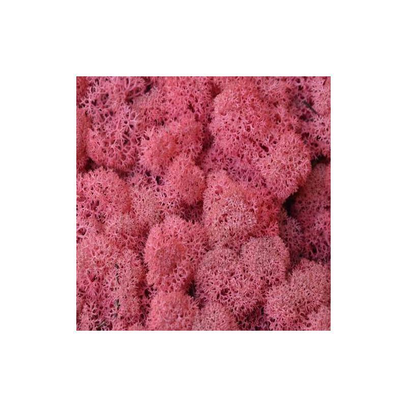 mousse d corative pour art floral rose sachet de 40 g mousse et lichen stabilis creavea. Black Bedroom Furniture Sets. Home Design Ideas