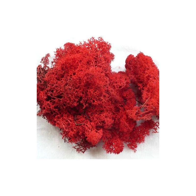 mousse d corative pour art floral rouge sachet de 40 g mousse et lichen stabilis creavea. Black Bedroom Furniture Sets. Home Design Ideas