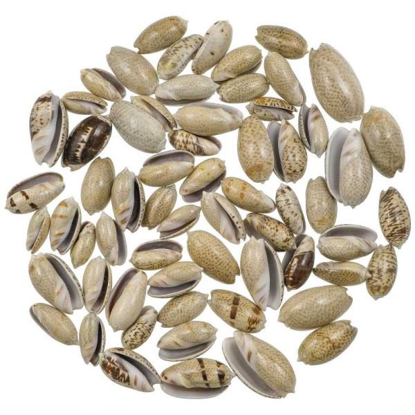 Coquillages oliva africana - 2.5 à 3.5 cm - 100 grammes - Photo n°1