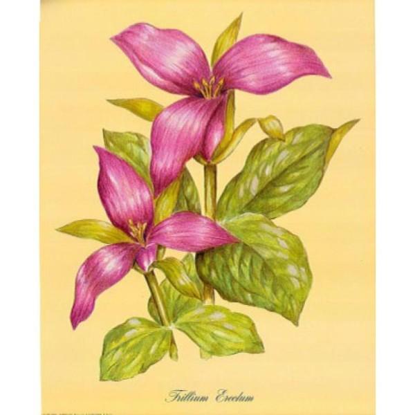 Image 3D Fleur - Trillium 24 x 30 cm - Photo n°1