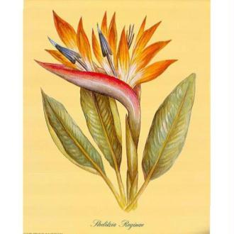 Image 3D Fleur - Fleur tropicale 24 x 30 cm