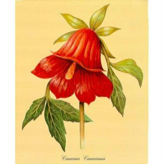 Image 3D Fleur - Canarina 24 x 30 cm