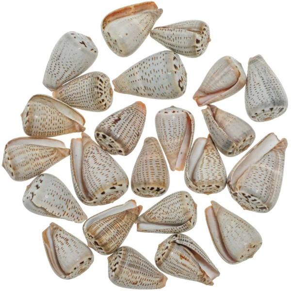 Coquillages conus assortis - 4 à 6 cm - Lot de 10 - Photo n°1