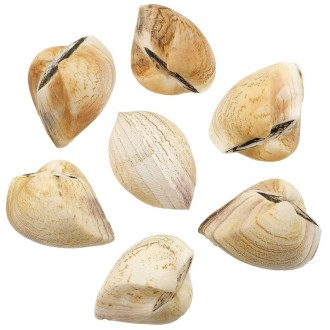 Coquillages cardium entiers - 7 à 9 cm - Lot de 2