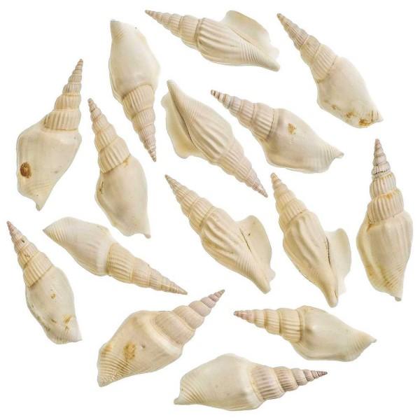 Coquillages strombus vittatus blancs - 6 à 7 cm - Lot de 5 - Photo n°1