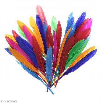 Plumes Indien Multicolores - 15 cm - 10 gr