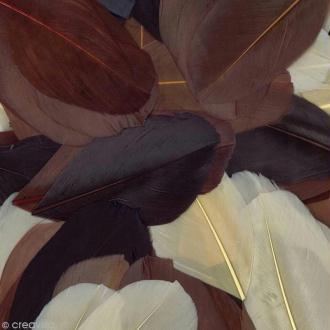 Plumes Coupées Camaïeu chocolat - 6 cm - 10 gr