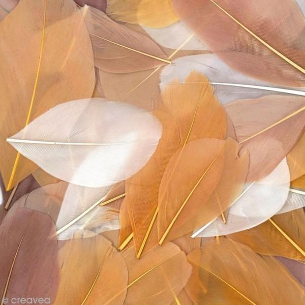 Plumes Coupées Camaïeu beige - 6 cm - 10 gr - Photo n°1