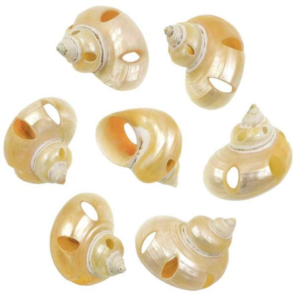 Coquillages turbo goldmouth nacrés et taillés - 5 à 6 cm - Lot de 2 - Photo n°1