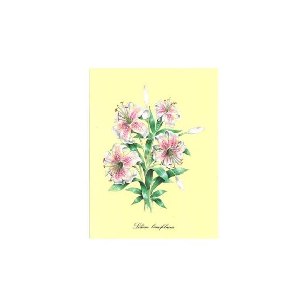 Image 3D - astro 429 - 24x30 - lilium lancifolium - Photo n°1