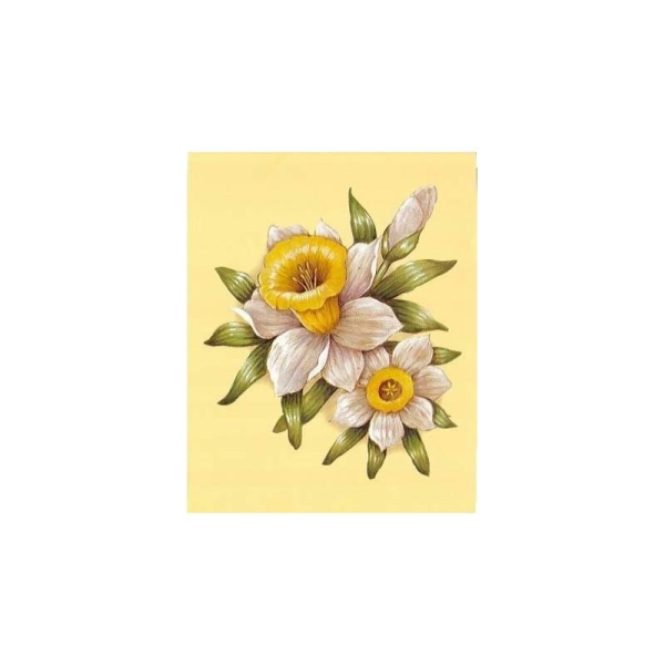 Image 3D - astro 558 - 24x30 - fleur blanc/jaune - Photo n°1