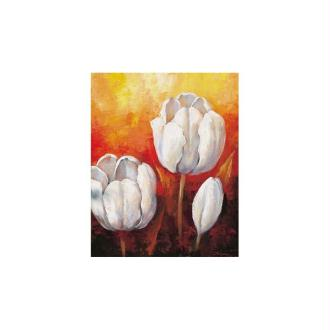 Image 3d - 2000709 - 40x50 - tulipes blanches