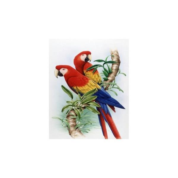 Image 3D - gk3040047 - 30x40 - perroquet - Photo n°1