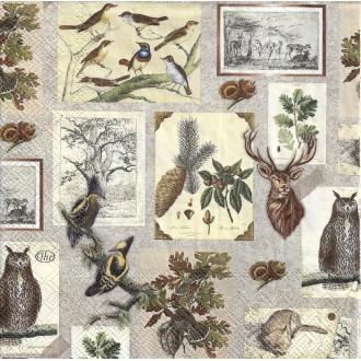 4 Serviettes en papier Botanique Oiseaux Hibou Format Lunch